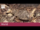 1m fish killed in Australian river catastrophe