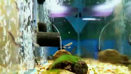 EPCAMR's Brook Trout Tank Live Stream 01/21/19