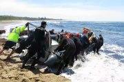 Shark diving Protea Bank South Africa - Plongée requin Protea Bank Afrique du sud