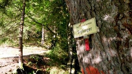 Bergtour im Allgäu: Über den Siplinger Kopf