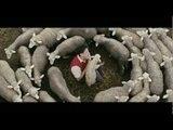 Deiva Thirumagal Tamil Movie | Pa Pa Pappa Video Song | Vikram | Anushka Shetty | G V Prakash Kumar