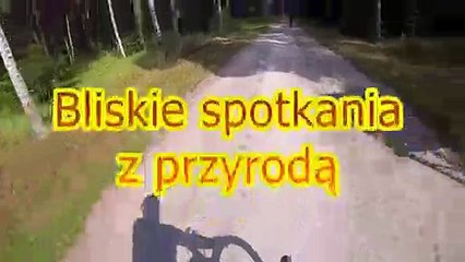 L'énorme frayeur d'un cycliste qui traverse une forêt !