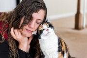 Les bienfaits d'un chat de compagnie