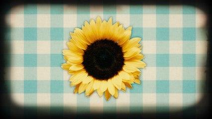 Neil Diamond - Sunflower