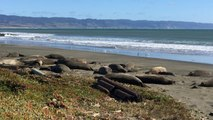 US Government Shutdown Affects California Beach In Large Way