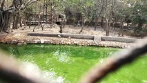 Nandankanan Zoological Park(Odia: ନନ୍ଦନକାନନ ଜୀବ ଉଦ୍ୟାନ) is a 400-hectare (990-acre) zoo and botanical garden in Bhubaneswar, Odisha, India. Established in 1960, it was opened to the public in 1979 and became the first zoo in India to join World Associatio