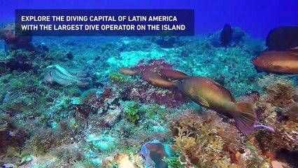 Dive Paradise: Cozumel's Largest Dive Operator