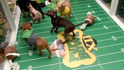 Puppy Bowl And Kitten Bowl: Where To Catch