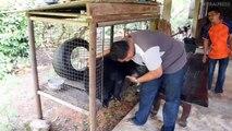 Gardener, Fights Back Tears As He Releases Pet Bear