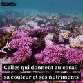 Un robot pour sauver la Grande barrière de corail