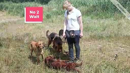 Dog Training Newcastle | GO For Dog Training