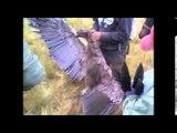 Autoridades investigan la caza de un Cóndor al sur de Cuenca