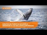 Las costas de Ecuador se llenan de turistas por el avistamiento de ballenas - Teleamazonas