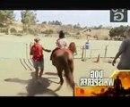 Dog Whisperer Season 5 Episode 10 Cesar and the Horse Whisperer