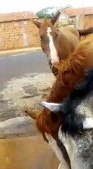 Autônoma alivia calor de cavalos de rua com banho na porta de sua casa em Araçatuba (SP)
