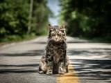 Pet Sematary: Official Trailer HD VO st FR/NL