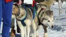La famille Labourier, passionnée de chiens de traîneaux