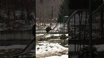 Vidéo drôle : Un ours descend le toboggan