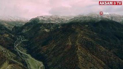Karlı dağlarda yaban keçileri havadan görüntülendi