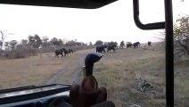 Un éléphant charge un groupe de touristes dans une jeep... Terrifiant