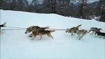 Initiation au la conduite des chiens de traîneau au Pays des Écrins