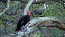 2 oiseaux africains rares s'échappent d'un zoo à Hawaï