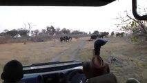 Un groupe de touristes attaqué par un éléphant au Botswana