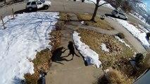 Un chien courageux poursuit un voleur de colis