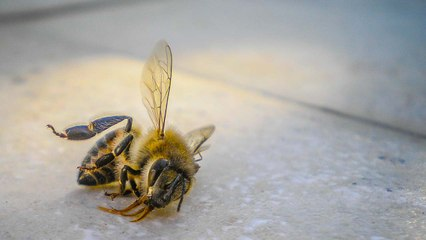 Rapidly Declining Insect Numbers 'Threaten Collapse of Nature'
