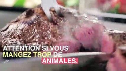 Stéathose héaptique : attention aux protéines animales_