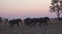 Un éléphant charge un groupe de touristes et fait un blessé