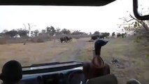 Un éléphant charge un groupe de touristes et blesse une personne !