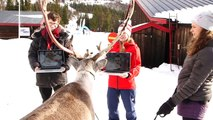 A reindeer predicts the winners of the men's giant slalom and the women's slalom