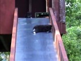Bébés chatons sur un toboggan ? Vidéo la plus mignonne du jour...