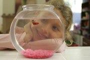Comment réaliser un aquarium d'eau douce