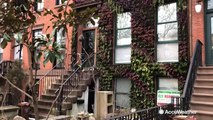 A living wall grows in Brooklyn