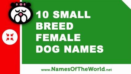 10 small breed female dog names - the best pet names - www.namesoftheworld.net