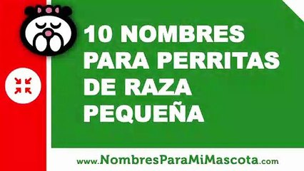 10 nombres para perritas de raza pequeña - nombres de mascotas - www.nombresparamimascota.com