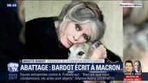 """""""On leur prend leur vie et on les fait souffrir mille morts."""" Brigitte Bardot part en guerre contre l'abattage sans étourdissement"""