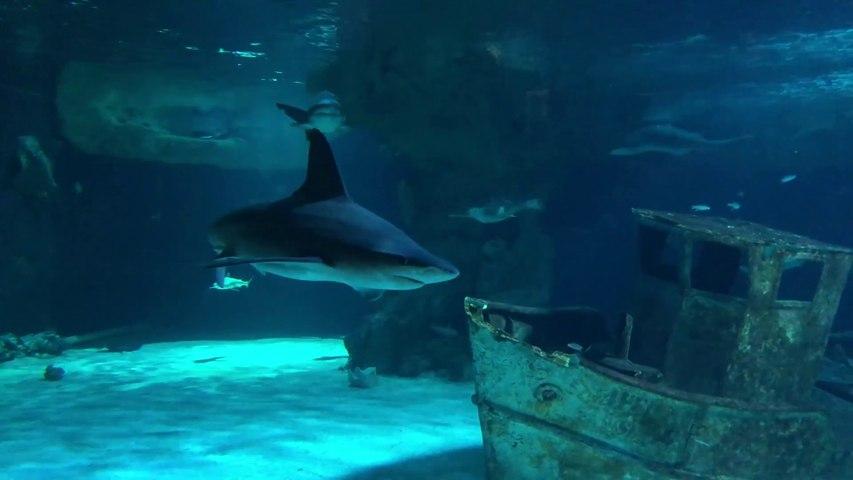 LE CROISIC   | Requins de l'Océarium du Croisic - Télé La Baule