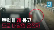 """[엠빅뉴스] """"짐칸에 있던 개가 빠져 나왔다"""" 진술한 운전자, 2월 19일 제주 서귀포시"""