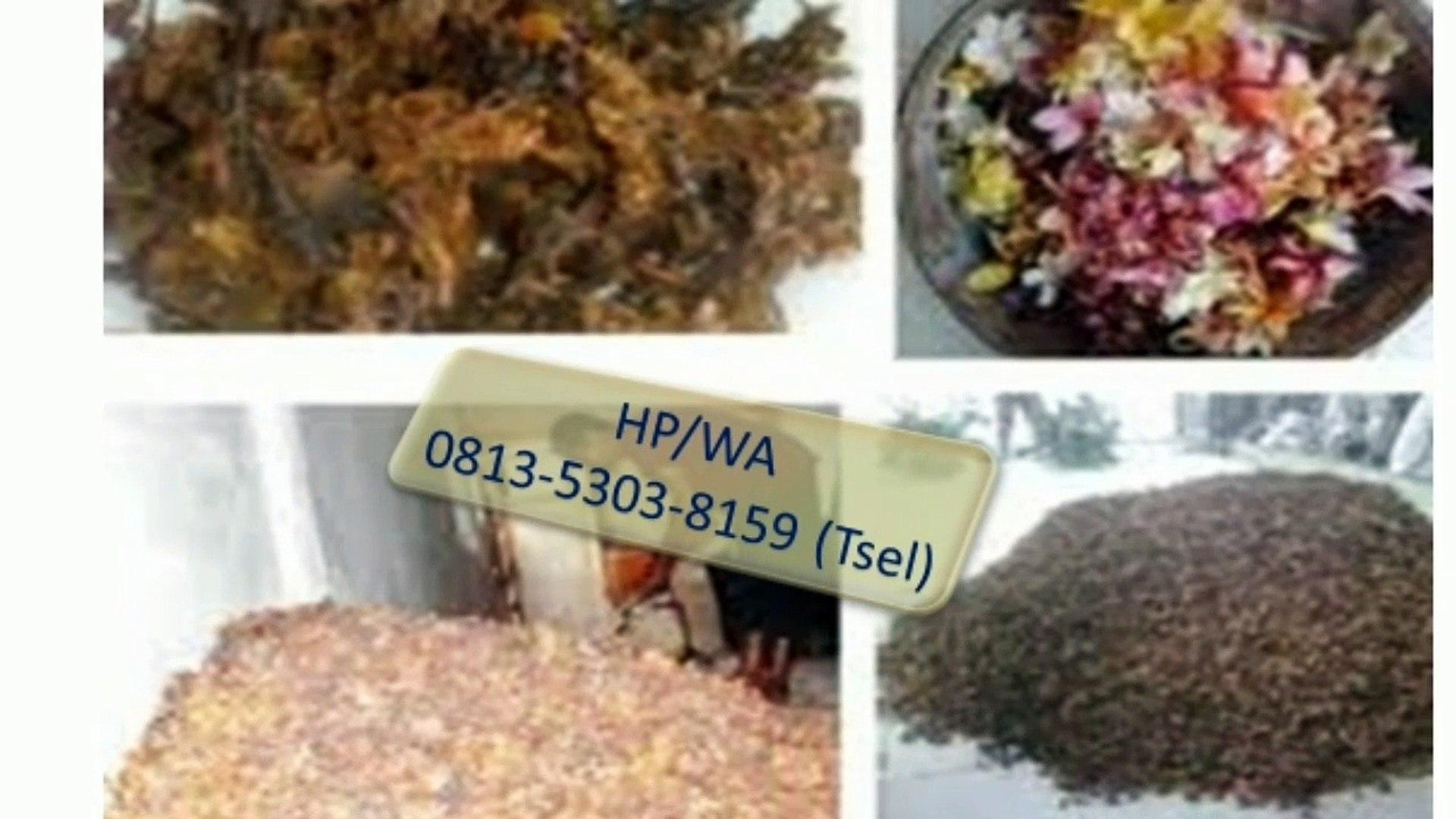 TERPERCAYA !!! HP/WA : 0813-5303-8159 (Tsel) Jual Bunga Kamboja di Kota Denpasar