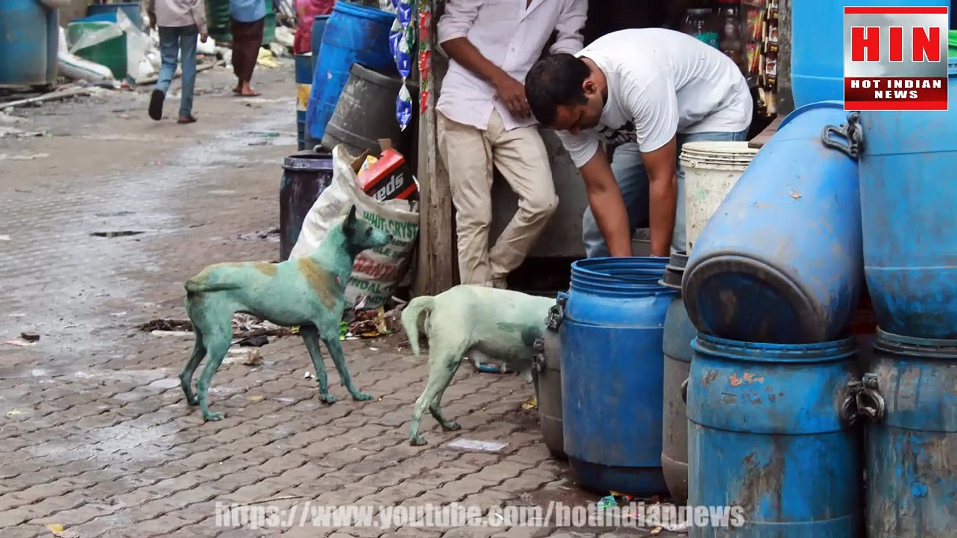 क्यों हो रहे हैं मुंबई के कुत्ते नीले ?  Dogs turning blue in Mumbai   Mumbai   Dogs
