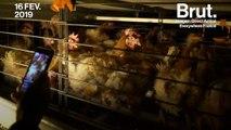 """""""Ce n'est pas de l'élevage, c'est l'enfer"""" : le rappeur Stomy Bugsy s'introduit dans un élevage de poules en batterie"""