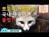 쪼꼬미 사막여우, 국내사육이 불법?! [신비한 동물사전 2회] #잼스터