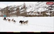 La montagne insolite #3 : les chiens de traîneaux, croc-blanc