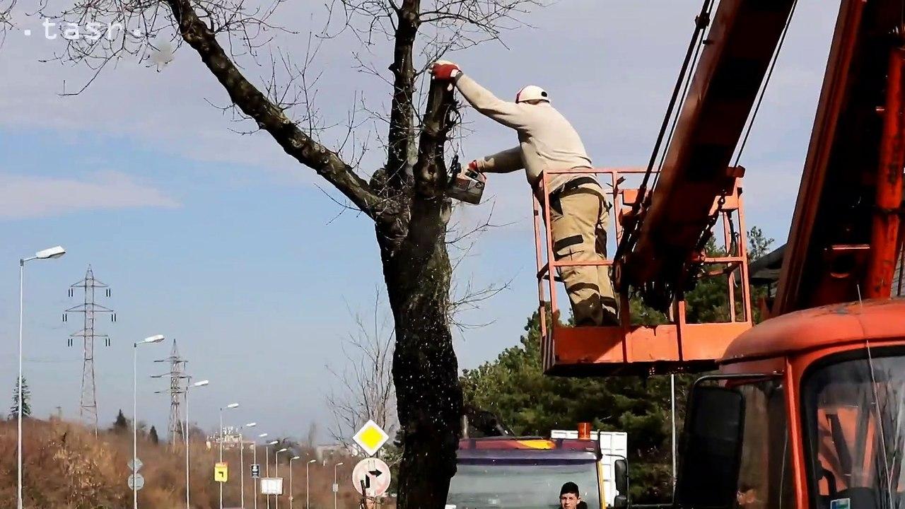 BRATISLAVA: Výrub stromov na Pionierskej ulici