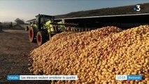 Saône-et-Loire: les éleveurs veulent améliorer la qualité de la viande