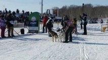 Псы готовятся к гонке на 1343 км на Дальнем Востоке