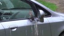Cet oiseau a décidé de pourrir la vie de cet automobiliste et de détruire sa voiture